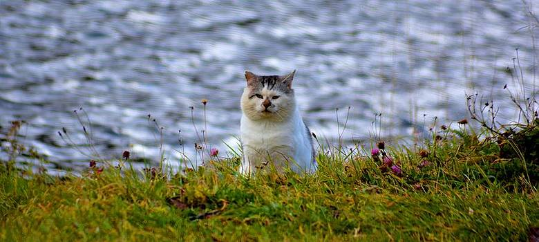Coastal Kitty by Debra Kent