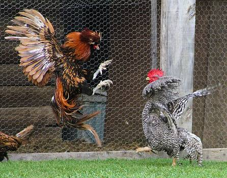 Cock Fight by Brad Fuller