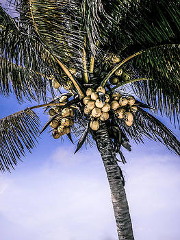 Julie Palencia - Coconut Tree