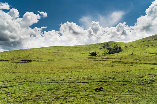 Lonesome Horse - Valenca - Brazil by Igor Alecsander