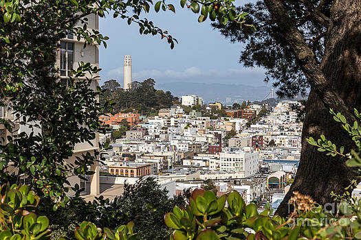 Kate Brown - Coit Tower View