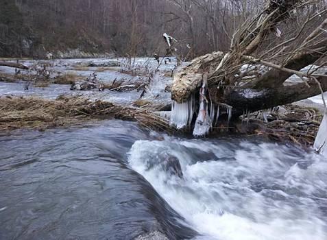 Cold River  by Kiara Reynolds