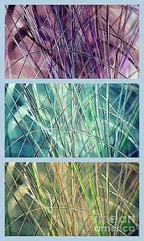 Susanne Van Hulst - Collage of See Grass