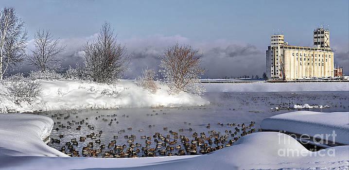 Collingwood Terminal Building in Winter  by Andrea Kollo