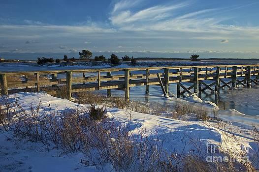 Amazing Jules - Colonial Acres Cape Cod