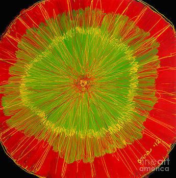 Color burst 2 by Anna Skaradzinska