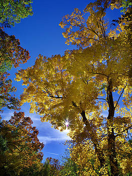 Color Canopy by Jamieson Brown