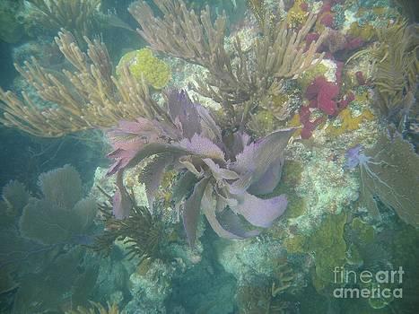 Adam Jewell - Color Corals