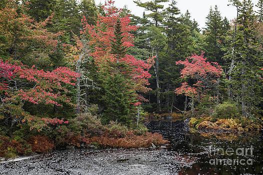 Color Creek by Scott Kerrigan