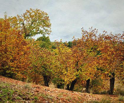 Color de Sierra 2 by Antonio Arcos
