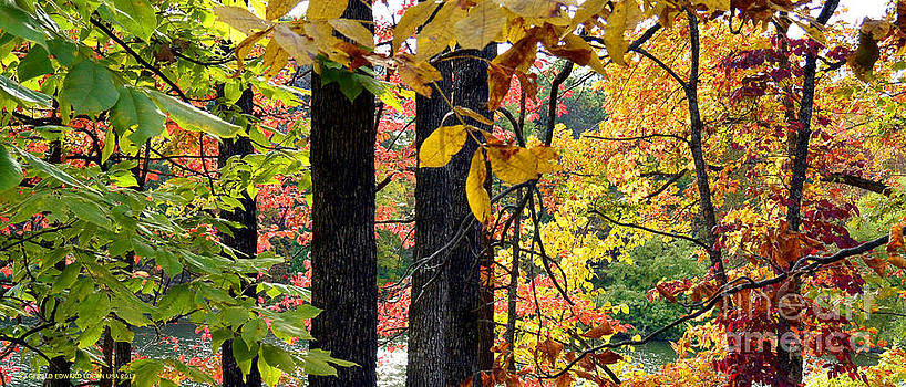 Color of October in the Ozarks by Gerald MacLennon