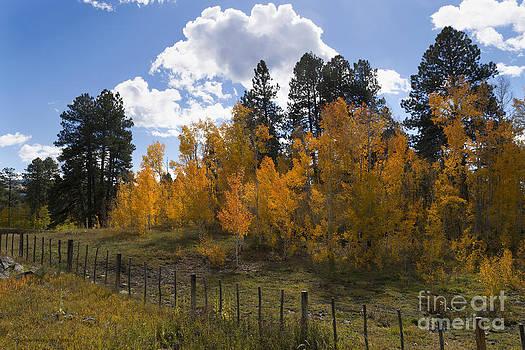 Jerry McElroy - Colorado Autumn