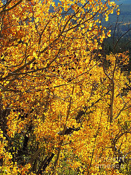 Colorado Gold Colors by Deniece Platt