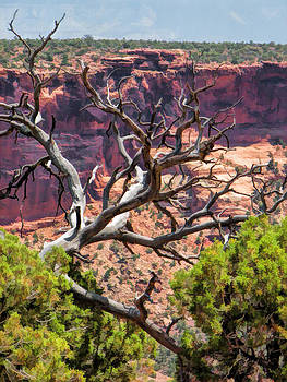 Christopher Arndt - Colorado National Monument Dead Branches