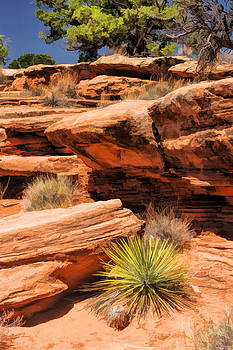Christopher Arndt - Colorado National Monument Desert Flora