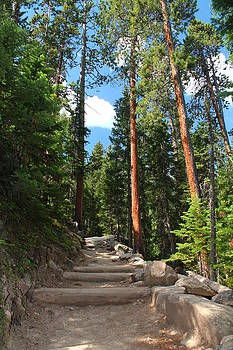 Colorado Trail by Alicia Knust