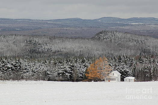 Colored winter by Isabel Poulin