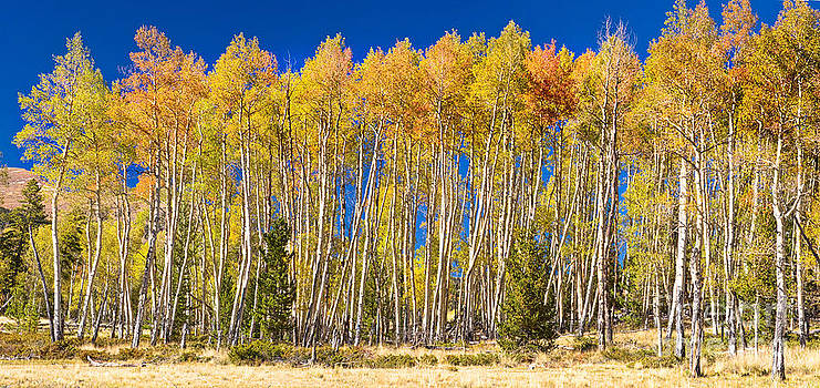 James BO  Insogna - Colorful Aspen Panorama