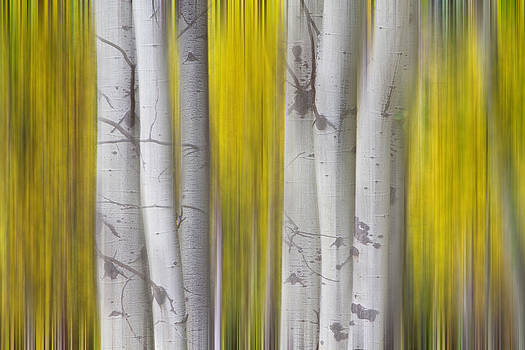 James BO  Insogna - Colorful Autumn Aspen Tree Colonies Dreaming
