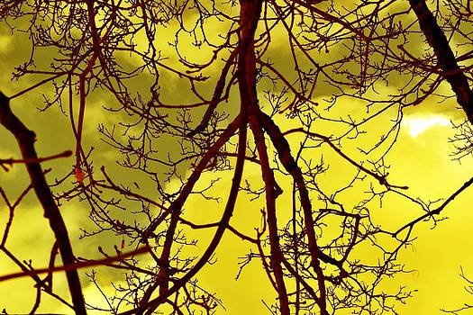 Colorful Branches by Michael Sokalski