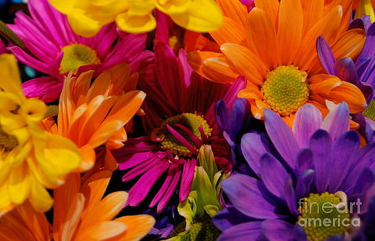 Colorful Daisies by Valerie Beasley