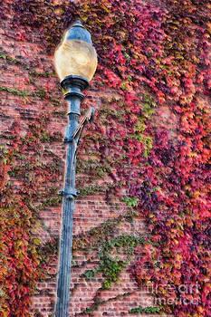 Dan Carmichael - Colorful Ivy and Lamppost II