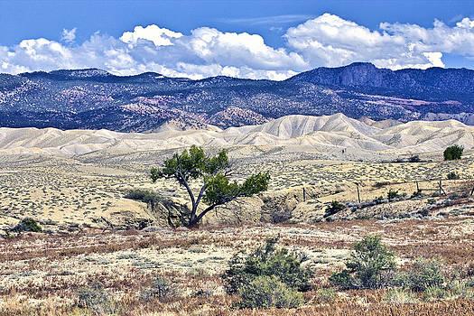 James Steele - Colorful Landscape Montrose Colorado