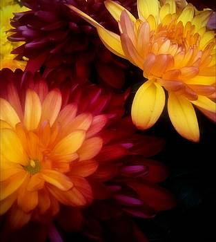 Colorful Mums by Michelle Frizzell-Thompson