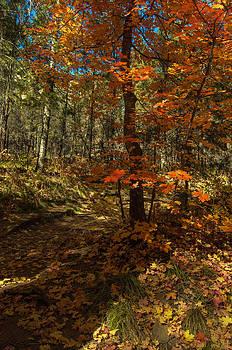 Tam Ryan - Colorful Path