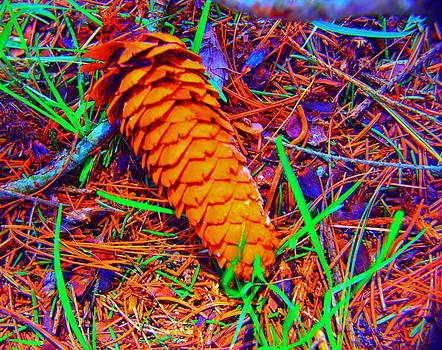 Colorful Pinecone by Michael Sokalski
