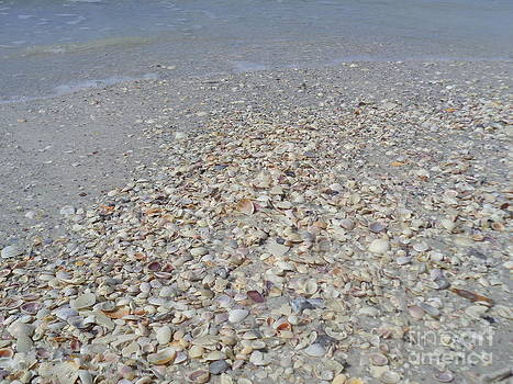 Colorful Shells at the Water's Edge by Jeanne Forsythe