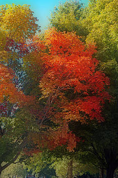 Colorful Trees by Katina Borges