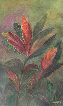 Colorfull by Usha Rai