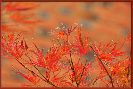 Colors of Fall by Mischelle Lorenzen