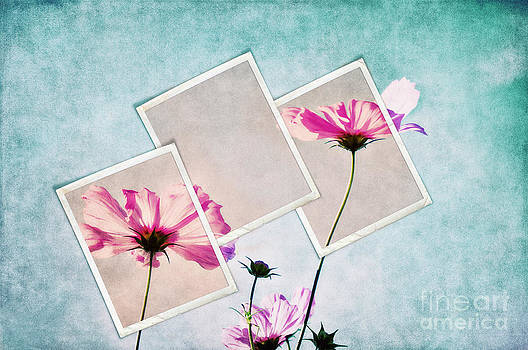 Angela Doelling AD DESIGN Photo and PhotoArt - Colors of nature