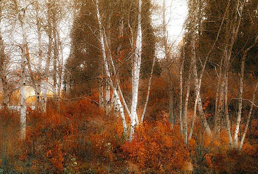 Julie Palencia - Colors of Nature