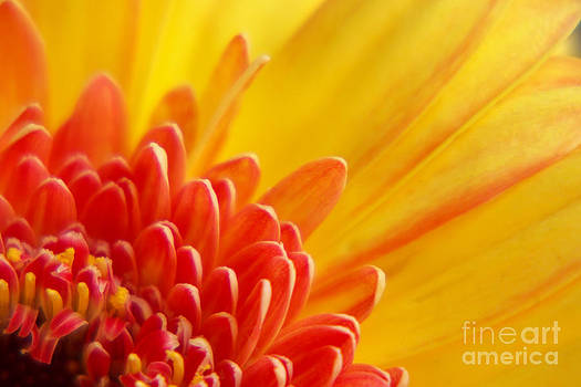 Angela Doelling AD DESIGN Photo and PhotoArt - Colors of summer
