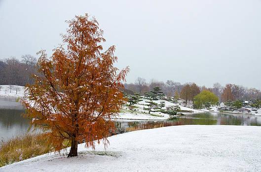 Julie Palencia - Colors of Winter 2