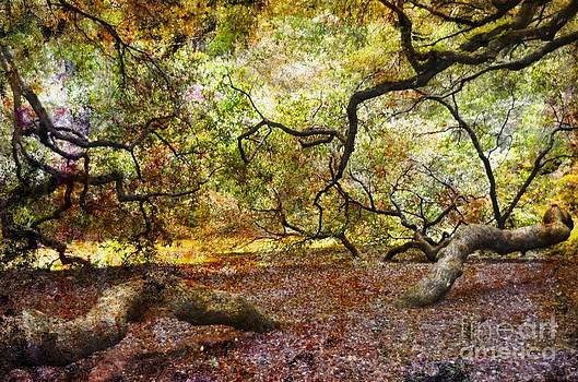 Colors Under The Tree by Kathleen Struckle