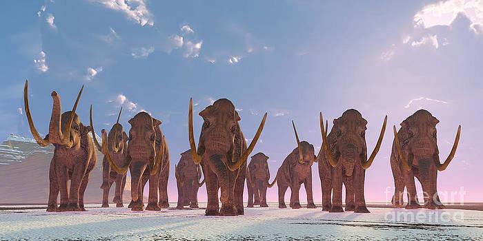 Corey Ford - Columbian Mammoth Herd