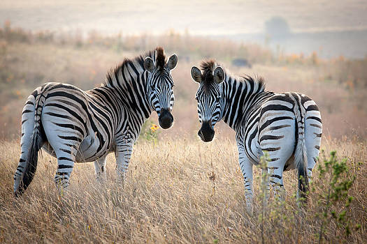 Come and play by Stephanus Le Roux