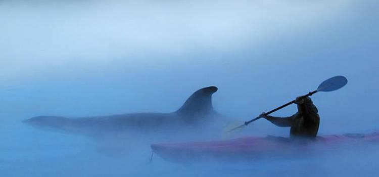 Companions in the Mist by Claudio Bacinello