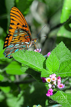 Complimentary Butterfly by Michelle Burkhardt
