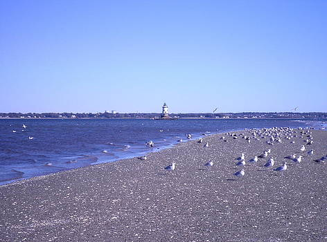 Kate Gallagher - Conimicut Point Lighthouse Seagulls Sand and Shells