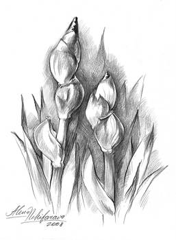 Conte Pencil Sketch of Two irises by Alena Nikifarava