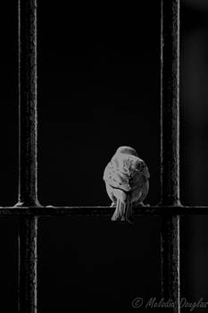 Contemplating Freedom by Melodie Douglas