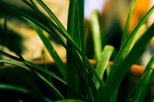 Cool Green by Debjyoti Ganguly