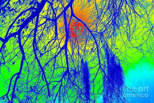 Cool Tree by Vicki Genna