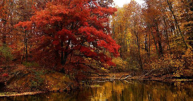 Randall Branham - Copper Cove Panorama Autumn