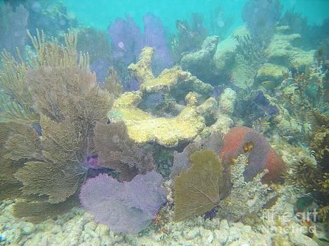 Adam Jewell - Coral Garden
